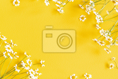 Plakat Flowers composition. Chamomile flowers on yellow background. Spring, summer concept. Flat lay, top view, copy space, square