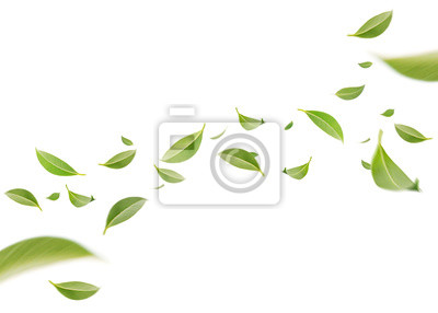 Plakat Flying whirl green leaves in the air, Healthy products by organic natural ingredients concept, Empty space in studio shot isolated on white background long banner