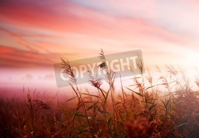 Plakat Foggy Landscape.Early Morning Mist.