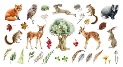 Plakat Forest wild animal big set. Watercolor illustration. Fox badger rabbit deer and chipmunk. Bunny, owl bird, toad, feather, leaf. Natural element collection. Realistic woodland set on white background