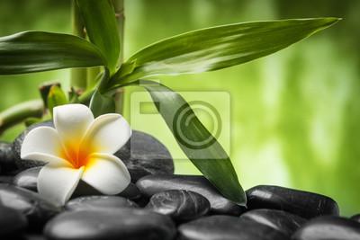 frangipani i bambusa na zen kamienie bazaltowe