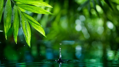 Plakat fresh green leaves with water drops over the water , relaxation with water ripple drops concept