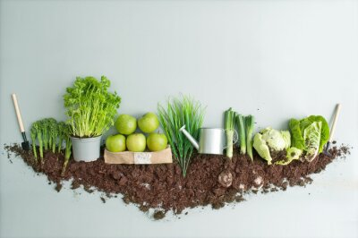 Plakat Fresh green organic fruits and vegetables growth