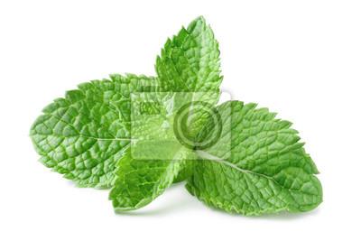 Plakat Fresh mint leaves, isolated on white background