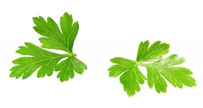 Plakat Fresh parsley  isolated on white background