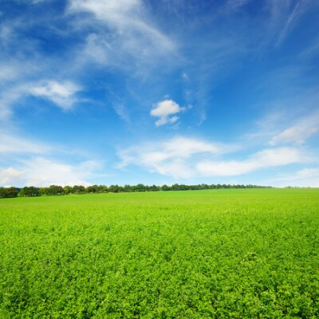 Plakat Fresh spring clover field and blue sky