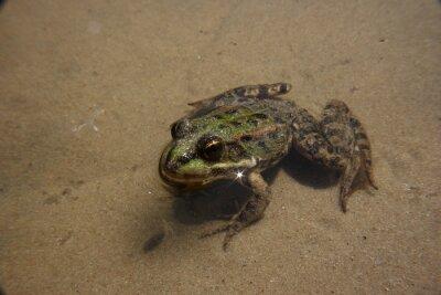 frog, ugly, sand, river, lake, beach, slimy, summer, spring, wet, little, animal image, tree, detail, closeup, environment, reptile, outdoors, nature photo, eyeball, eyes, cute, environmental
