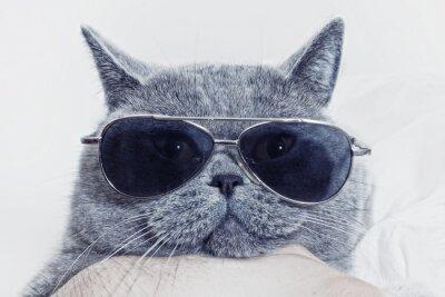Plakat Funny kaganiec szary kot w okularach
