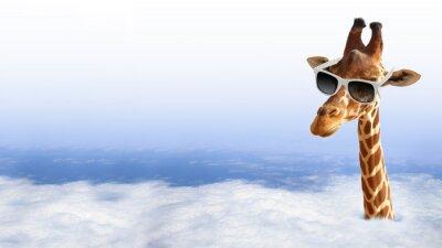 Plakat Funny żyrafa z okulary wychodzi z chmury