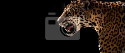 Plakat gepard, lampart, jaguar