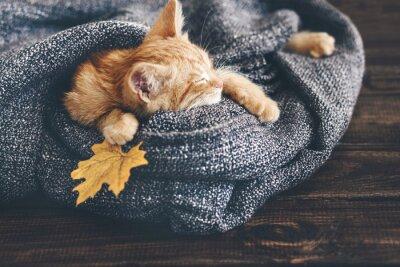 Plakat Gigner kotek śpi