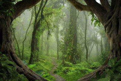 Plakat Głębokie tropikalnych dżunglach Nepalu