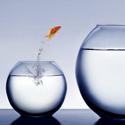 Plakat Goldfish skoków się z wody