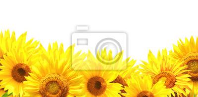 Plakat Granicy z słoneczniki