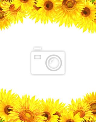 Granicy z słoneczniki