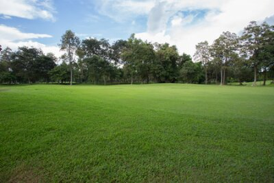 Plakat green grass field in the park