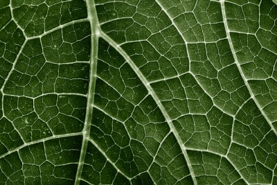 Plakat green leaf close up in the detail