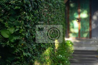 Plakat greenery in the yard, front door.