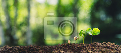 Plakat Growth Trees concept Coffee bean seedlings nature background Beautiful green
