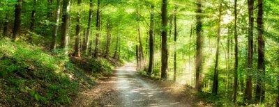 Plakat Grünes Wald Panorama im Sonnenlicht