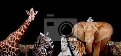 Plakat Grupa zwierząt są razem na czarnym tle z tekstem
