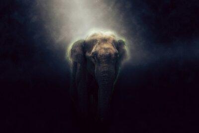 Plakat HDR zdjęcie słonia