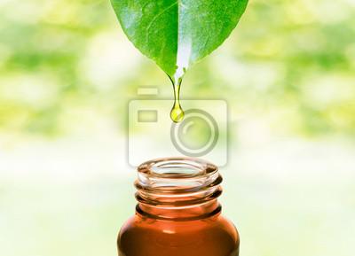 Plakat Herbal essence. Medycyna zdrowa alternatywa. Ochrona skóry. Olejek eteryczny lub wody spada ze świeżych liści, do butelki.
