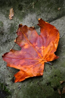 Plakat Herbstlaub