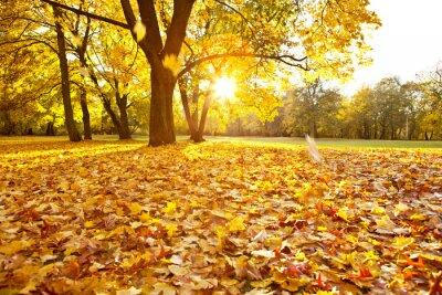 Plakat Herbsttag