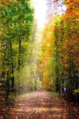 Plakat Herbstwald