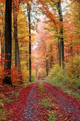 Plakat Herbstwaldweg im Oktober