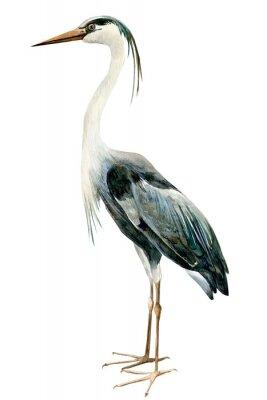 Plakat heron birds on isolated white background, watercolor illustration