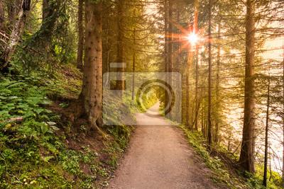 Plakat Idąc ścieżką w lesie rano z pięknych promieni słonecznych.