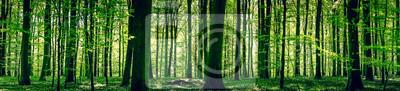 Plakat Idylliczne lasu na wiosnę
