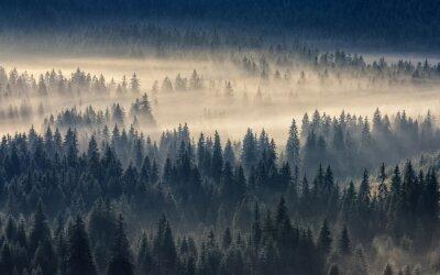 Plakat iglastego lasu w mglisty górach