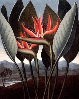Plakat ilustracja kwiat