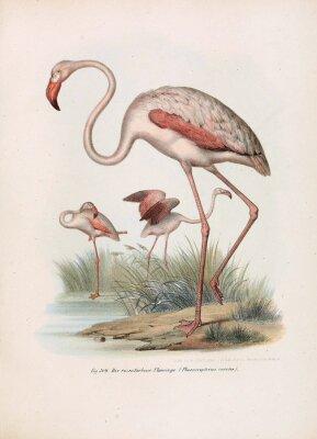 Plakat Ilustracja ptaków.