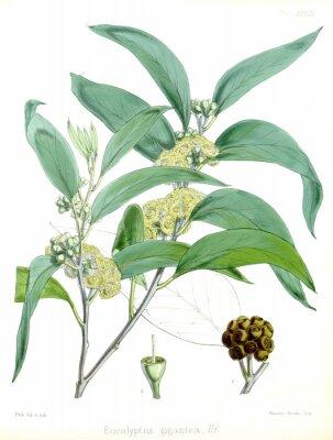 Plakat Ilustracja roślin