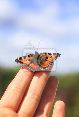 Plakat jasny pomarańczowy motyl siedzi na palcach dłoni mężczyzny i leci do błękitnego nieba