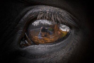 Plakat Jazda oczu