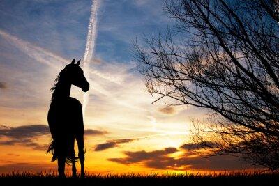 Plakat Jazda sylwetka na zachodzie słońca