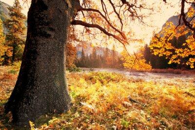 Plakat jesień