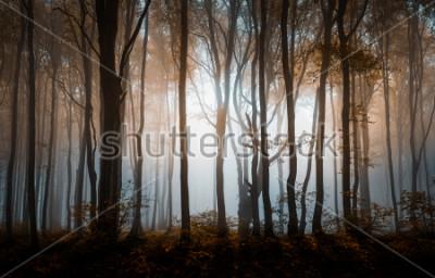 Plakat Jesień las mglisty. Góry Bałkańskie, Bułgaria.