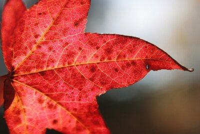Plakat jesień liści