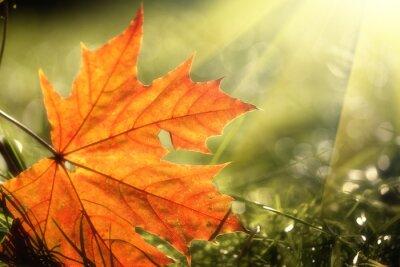 Plakat Jesień liścia na zielonym tle trawy