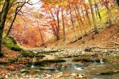 Plakat Jesień w lesie