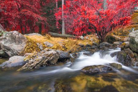 Plakat Kamphaeng Phet, Khlong Lan waterfall in autumn forest,