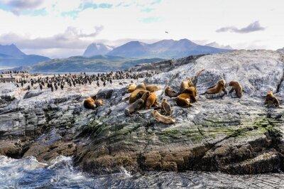 Plakat Kanał Beagle, Ushuaia, Argentyna