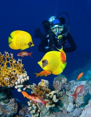Plakat Kobieta nurek zwiedzania ogrodu koralowego