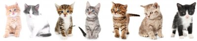 Plakat Kolaż cute kociaków na białym tle